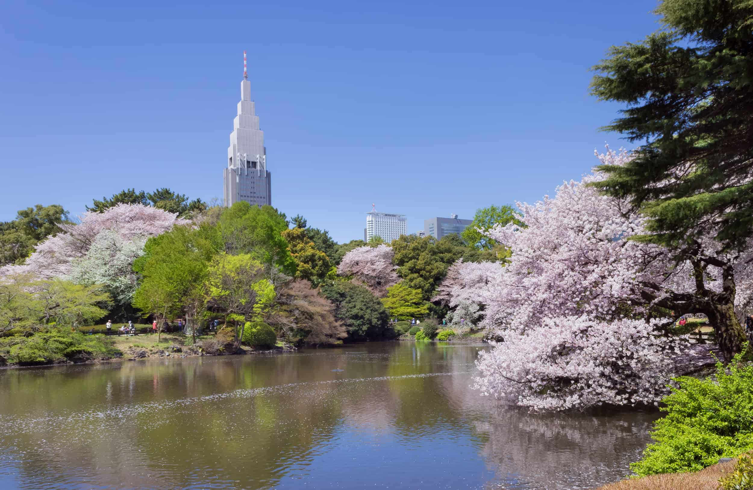 visit the Shinjuku Gyoen National Garden